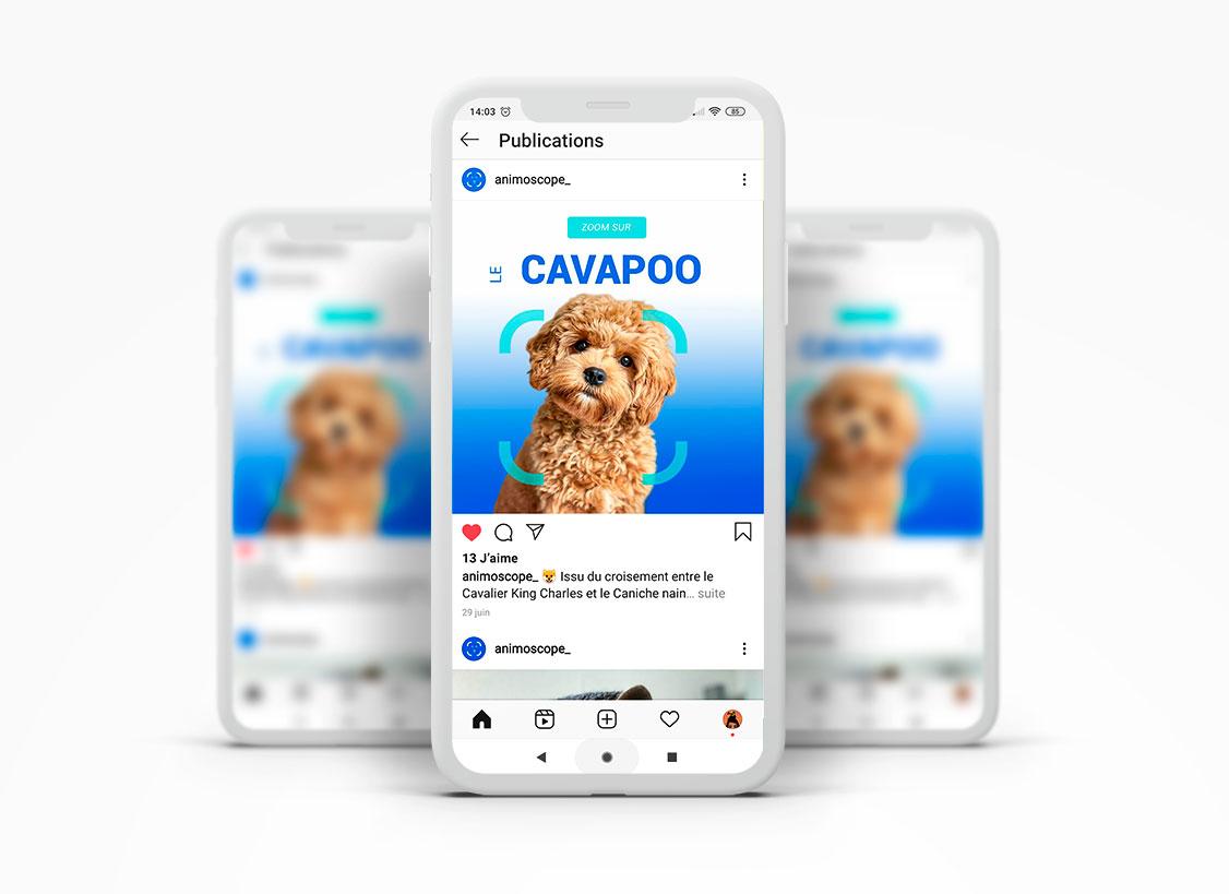 chien sur Instagram